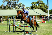 Show Jumping - 80cm