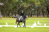 Dressage 11.00am to 12.00pm