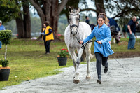Horse Inspection & Trot up